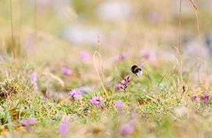 Soft on pollinators course