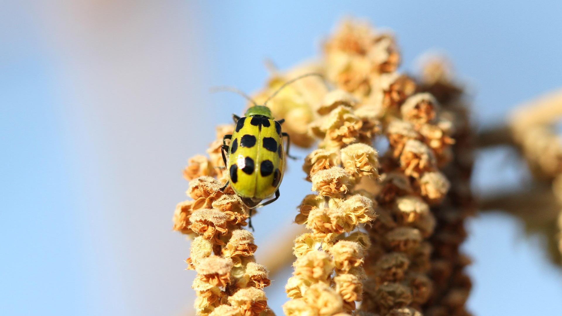 Beetle image