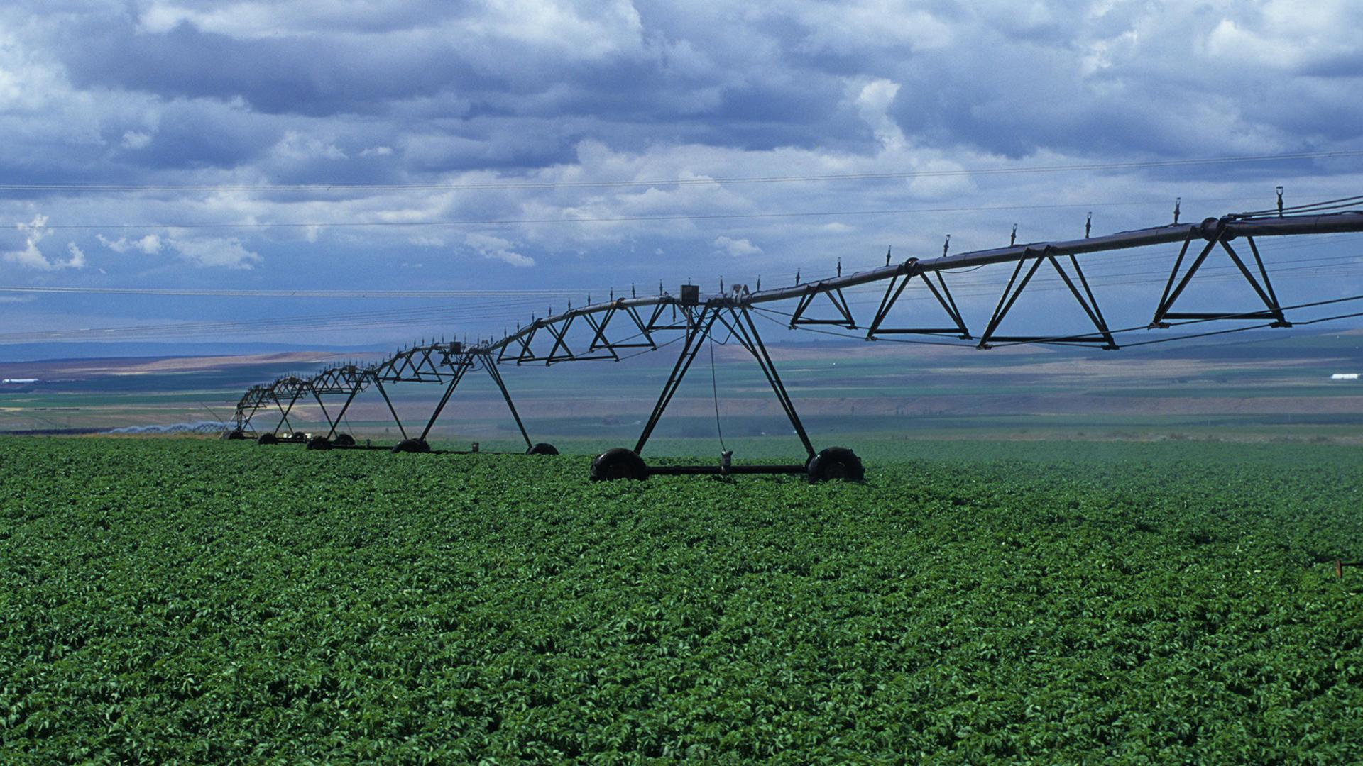 Crop field image