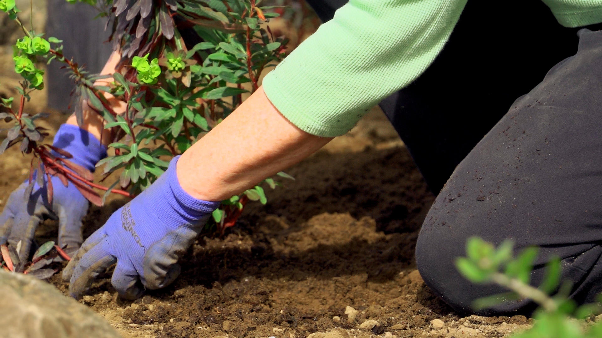 Master Gardener Short Course Series Professional And