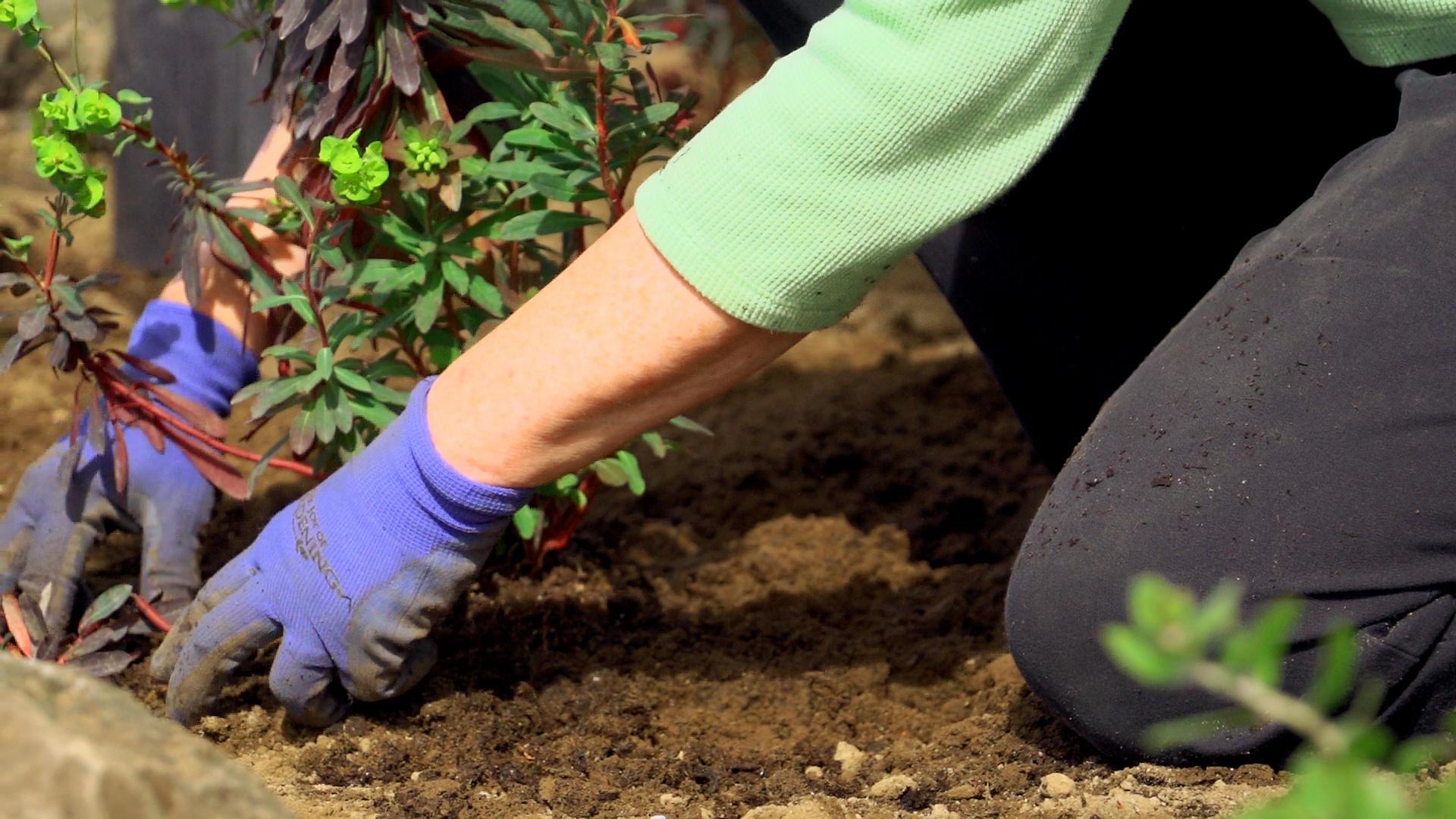 Master gardener series sustainable landscape design professional master gardener series sustainable landscape design workwithnaturefo