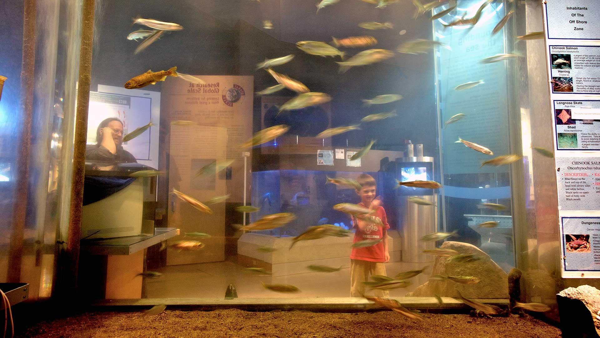 Child in front of aquarium tank