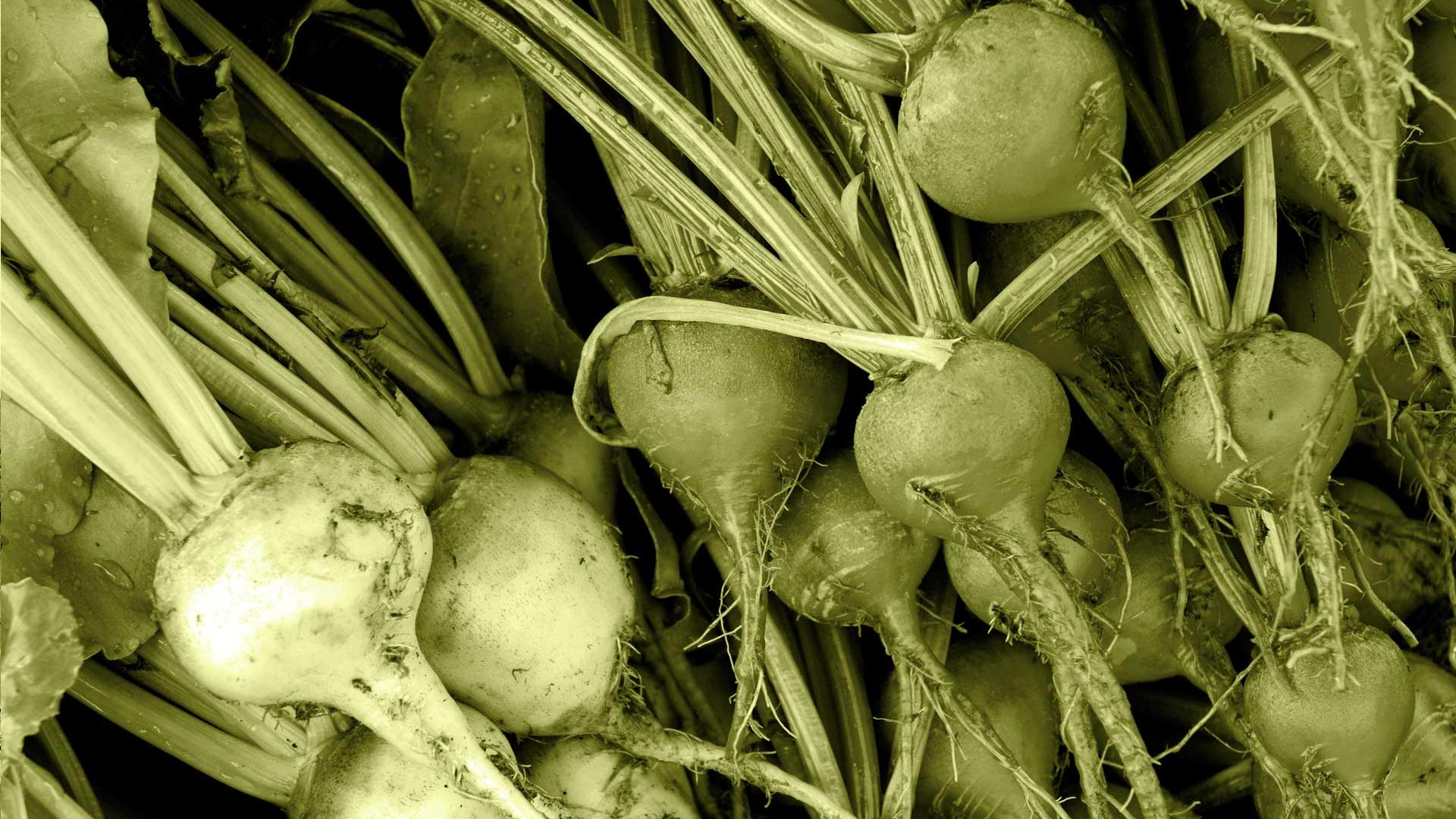 Close up of picked food crops