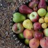 permaculture food forests fruit basket