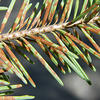 Plant Disease Course
